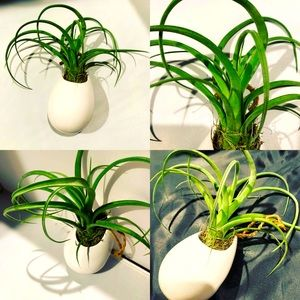 Oval ceramic hanging vase with air plant